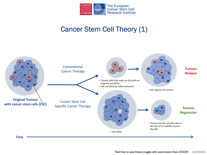 cancer stem cells essay Recent reemergence of the cancer stem cell hypothesis and the isolation of presumptive cancer stem cells from many types of cancer have forced a reexamination of.